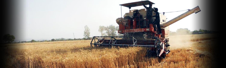 cio-crops